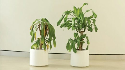 Ezért ne beszélj csúnyán a növényeddel