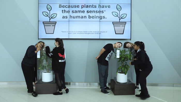 What-happens-when-you-bully-an-IKEA-plant-5af02cb66119b__700