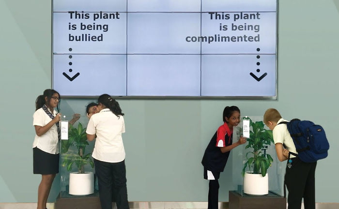 What-happens-when-you-bully-an-IKEA-plant-5af0380a2e570__700