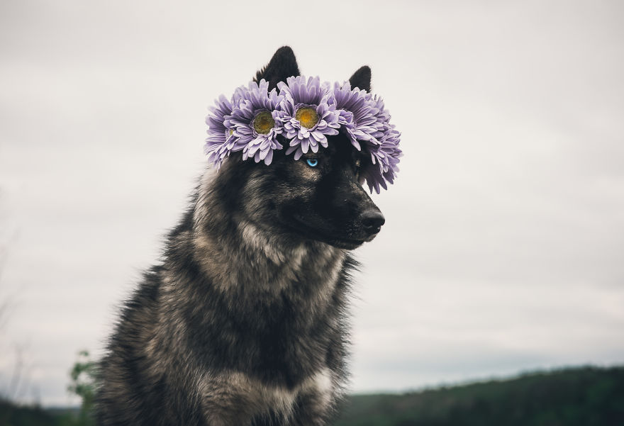 Canadian-Photographer-Captures-Her-Dogs-In-The-Most-Dreamy-Photographs-5bcda3806ec85__880