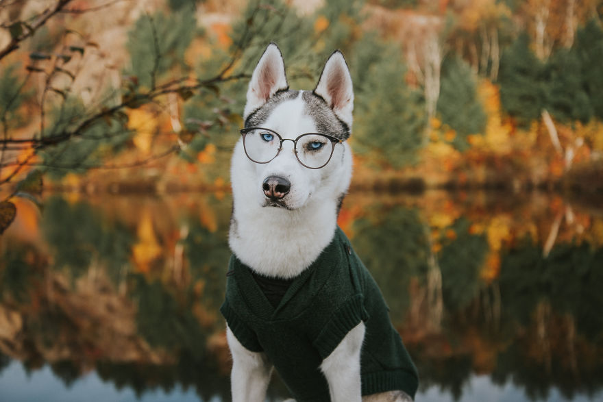 Canadian-Photographer-Captures-Her-Dogs-In-The-Most-Dreamy-Photographs-5bcda7357646a__880