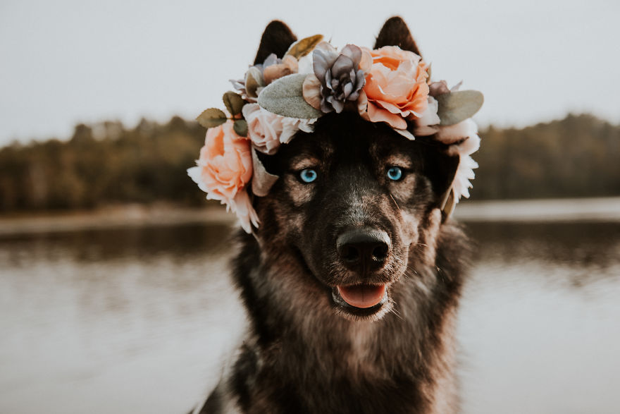 Canadian-Photographer-Captures-Her-Dogs-In-The-Most-Dreamy-Photographs-5bcda96c8b04a__880