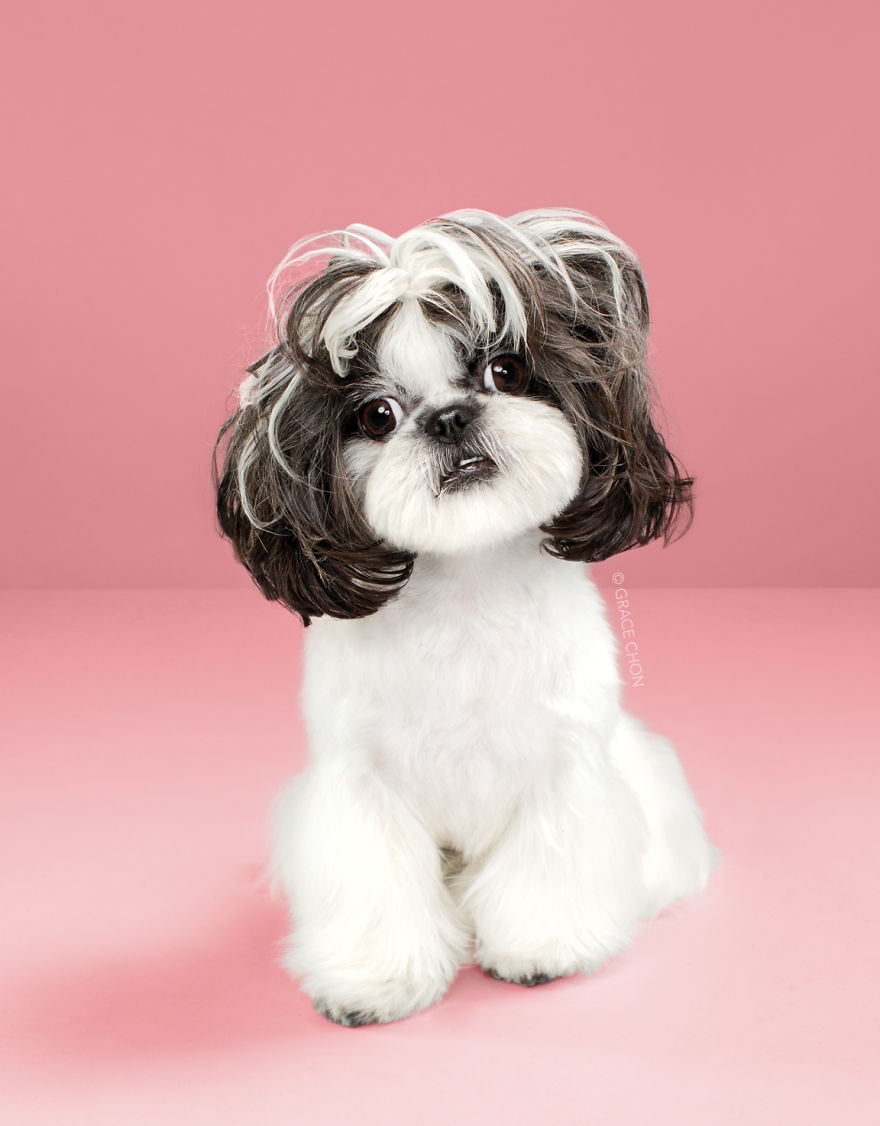 Dogs-Before-and-After-their-Haircuts-Part-2-19-photos-5bf4b6ae721b9__880