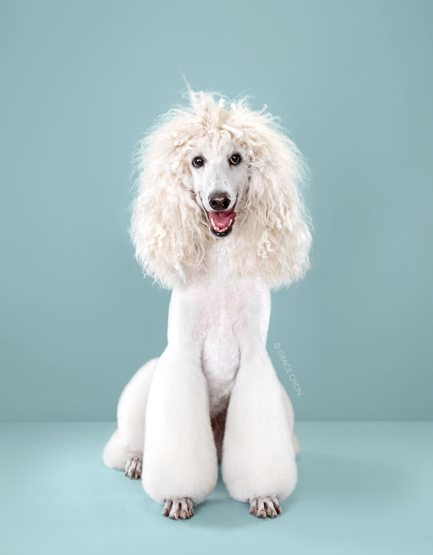 Dogs-Before-and-After-their-Haircuts-Part-2-20-photos-5bf4b712dd7cd__880
