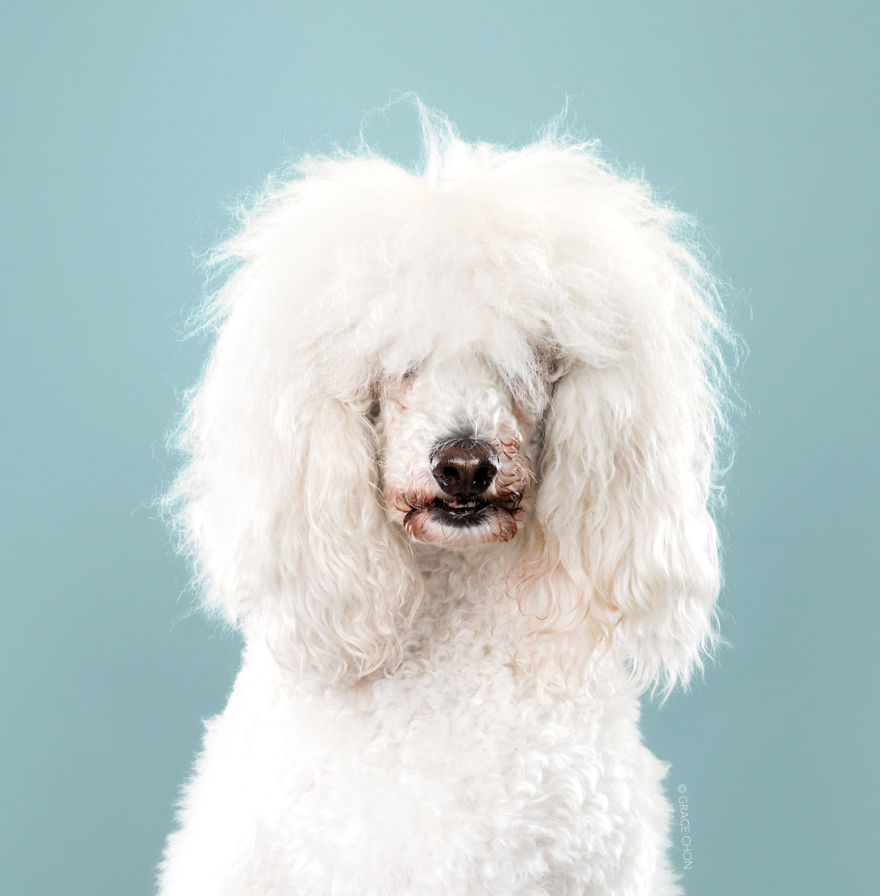 Dogs-Before-and-After-their-Haircuts-Part-2-36-photos-5bf4b4852b03d__880