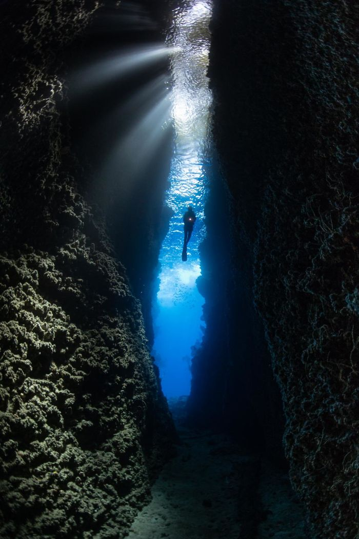 ocean-art-underwater-photo-contest-2018-146-5c4f153fac1d3__700