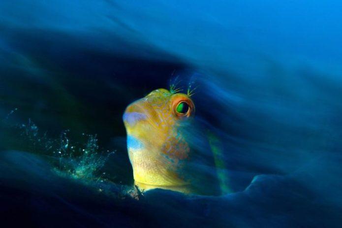 ocean-art-underwater-photo-contest-2018-150-5c4f16204b7eb__700