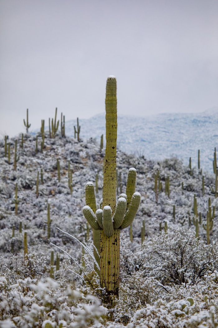 unusual-weather-snow-arizona-5c3f201907e0d__700