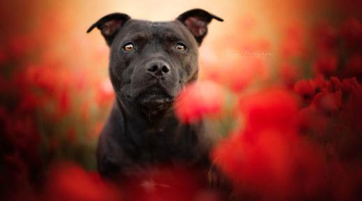 A kutyák csodálatos személyiségei