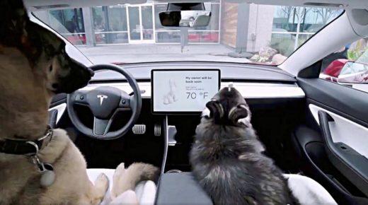 A Tesla új állatbarát funkciója