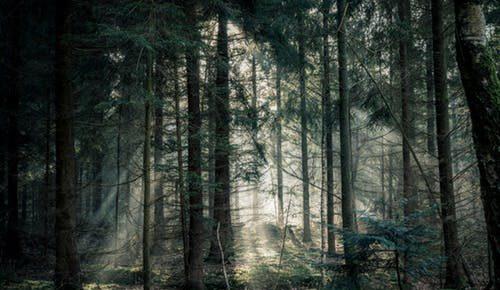 Mit rejt az erdő?