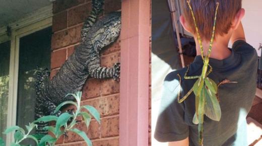 Meghökkentő fotók Ausztráliából