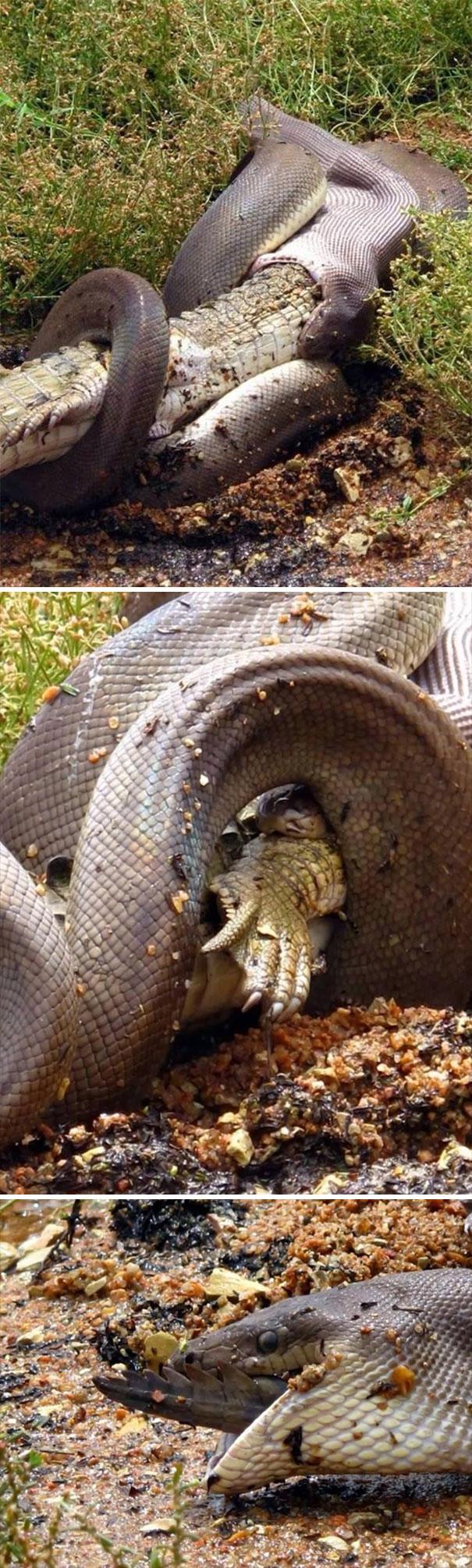 australia-scary-nature-animals-5-5d230233ded3c__605