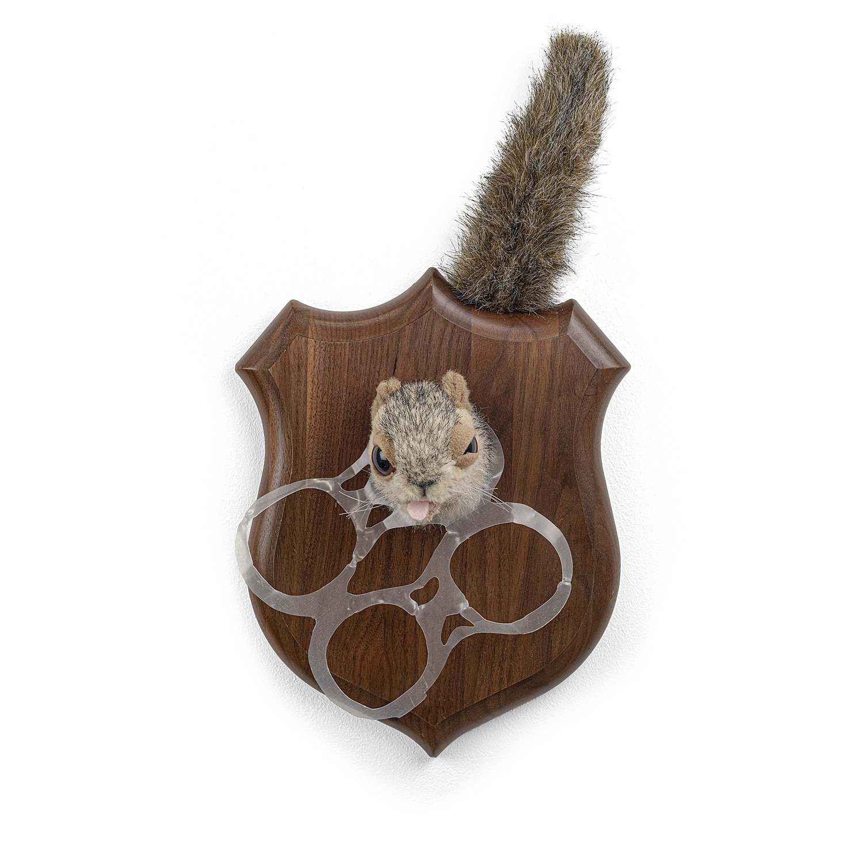 écureuil-1