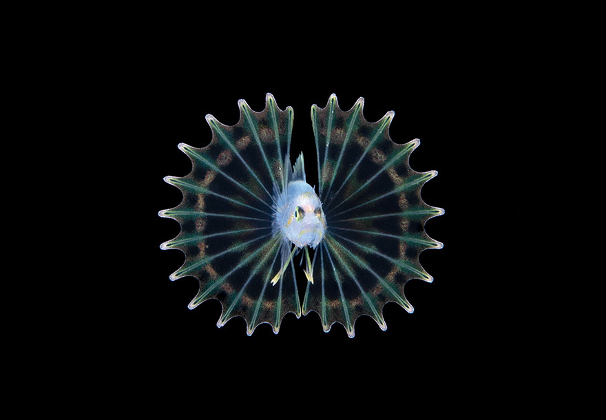 ocean-art-contest-winners-2019-3-5e1da7ae2a217__880