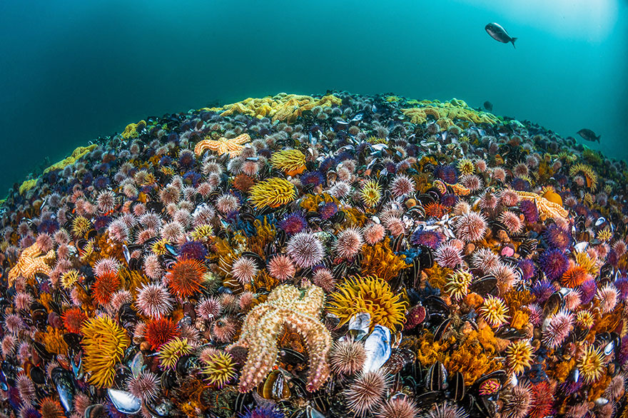 ocean-art-contest-winners-2019-75-5e1da8425759f__880
