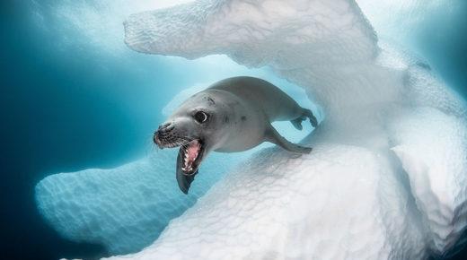 10 lenyűgöző díjnyertes fotó az Ocean Art 2019 versenyéről