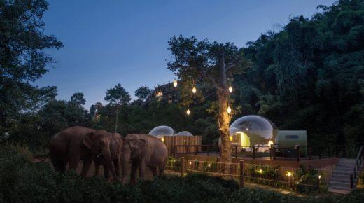 Tölts egy éjszakát elefántokkal