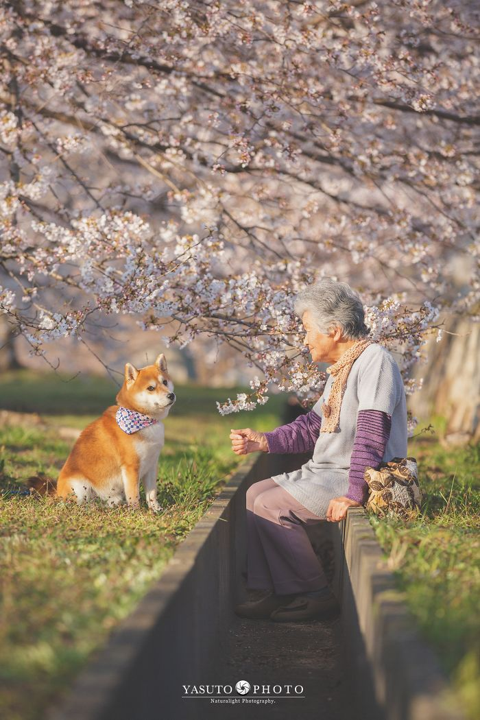 grandmother-dog-shiba-inu-photos-yasuto-34-5e3d17b71f609__700