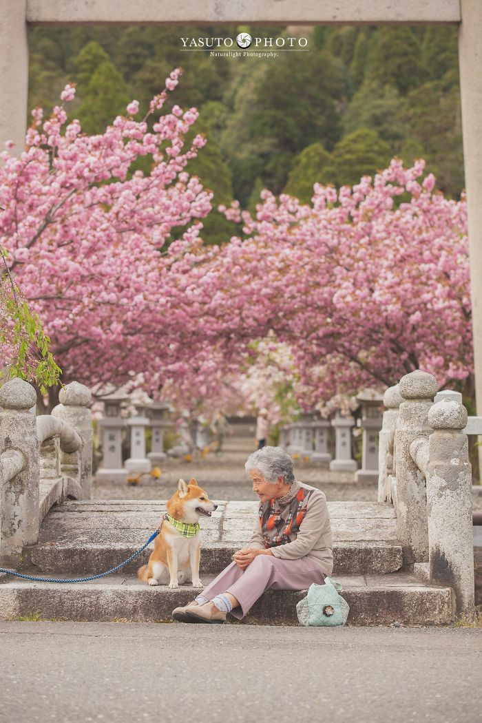 grandmother-dog-shiba-inu-photos-yasuto-38-5e3d17c13221c__700