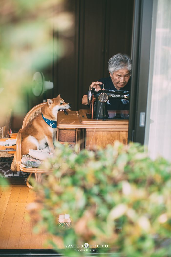 grandmother-dog-shiba-inu-photos-yasuto-40-5e3d17c63025a__700