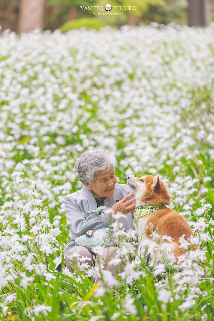 grandmother-dog-shiba-inu-photos-yasuto-51-5e3d17e61f03d__700