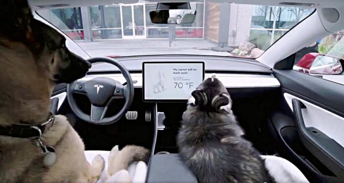 Tesla-Dog-Mode-1170x625