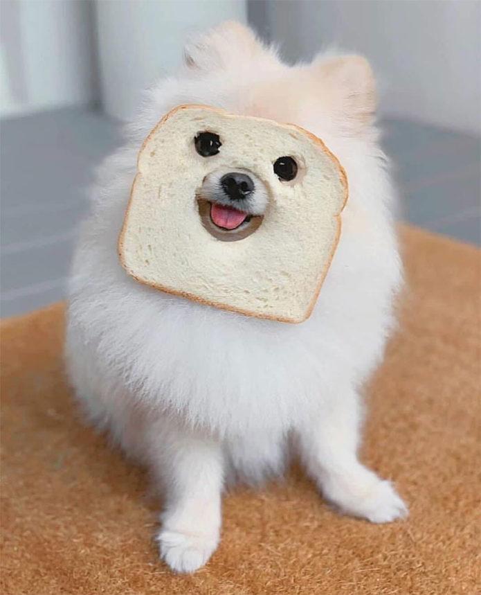 funny-animals-stuck-in-bread-8-5ee76818ecb57__700
