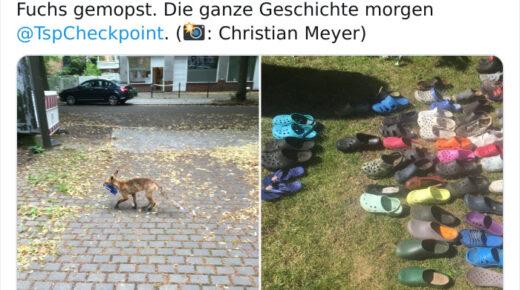 A berlini róka, mint Crocs-tolvaj, több mint 100 ellopott cipő gyűjteményével aludt el, és az emberek fantasztikusnak találják