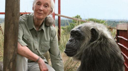 Jane Goodall megkapta a világ egyik legnagyobb pénzjutalommal járó elismerését