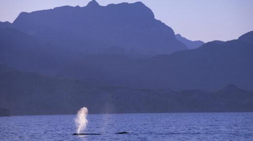 Tenger alól szól a bálnaének